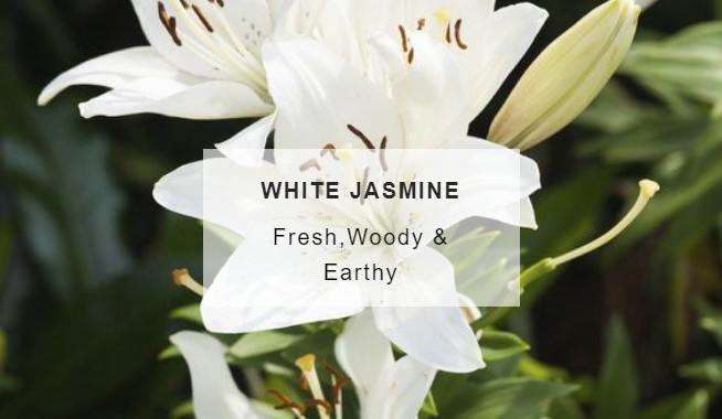 jasmine-